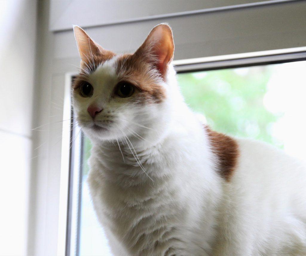 Das Bild zeigt die Katze Lucy.