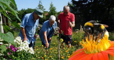 Insektenzählen für den NABU. Drei Personen stehen vor einem Blumenbeet