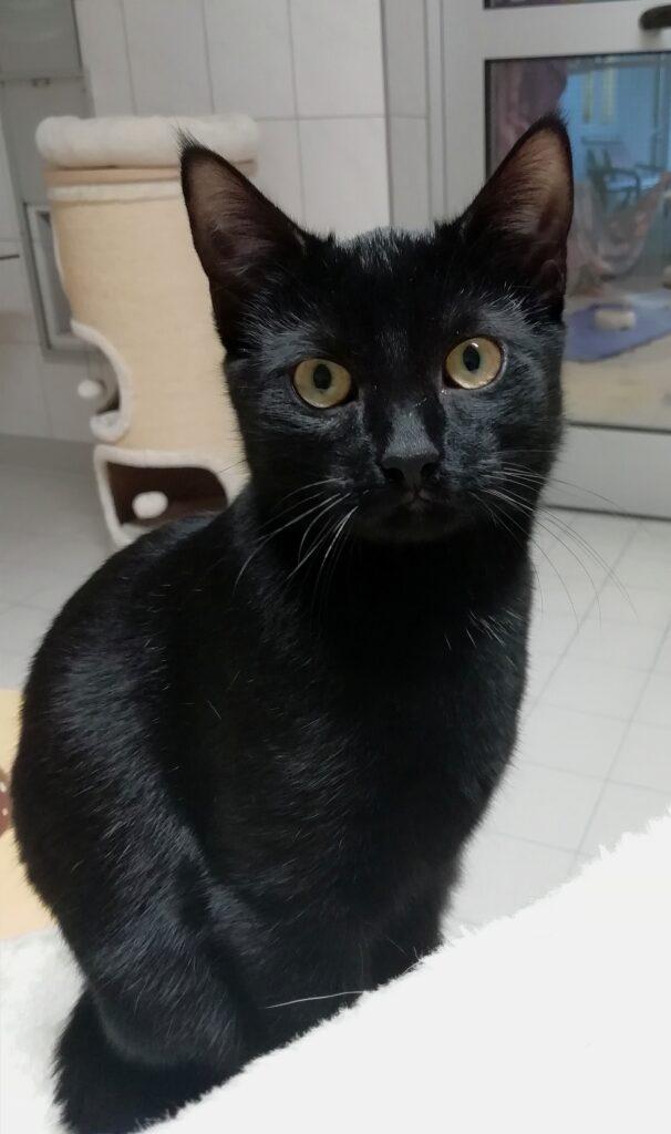 Schwarze Katze Yummi