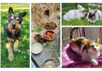 Tierheimtiere suchen ein liebevolles Zuhause