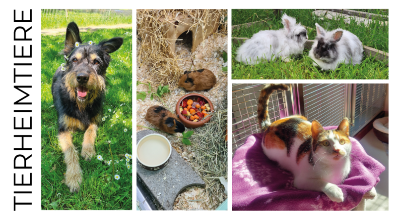 Fotos von Tieren aus dem Tierheim